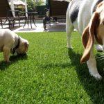 Synthetic Pet Turf Company San Marcos, Artificial Pet Grass Backyard Installation