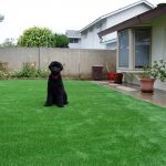 Synthetic Lawn Pet Turf San Marcos, Top Rated Artificial Grass Installation for Dogs