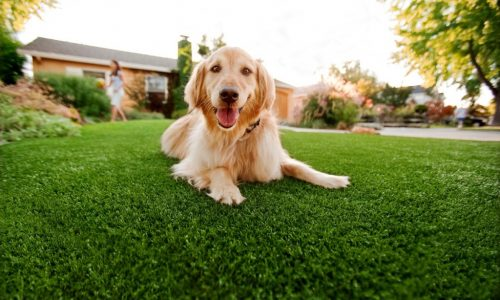 Synthetic Grass For Dogs San Marcos, Artificial Lawn Dog Run Installation