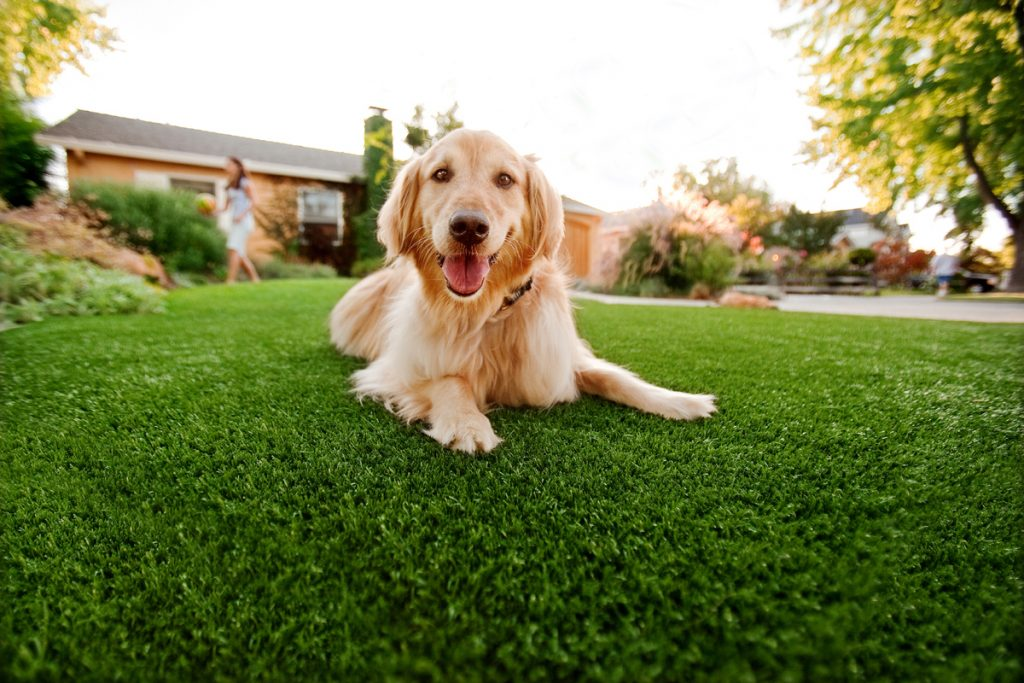 Synthetic Grass For Dogs San Marcos,
